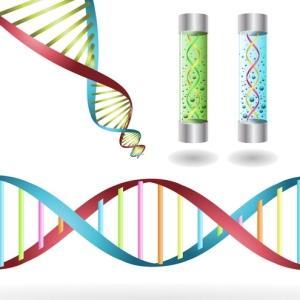 DNA Strains